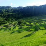 Oyama terraced rice paddies