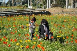 spring_poppies