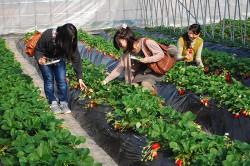 spring_strawberry