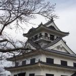 shiroyama_sakura2