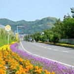 flowerline-1