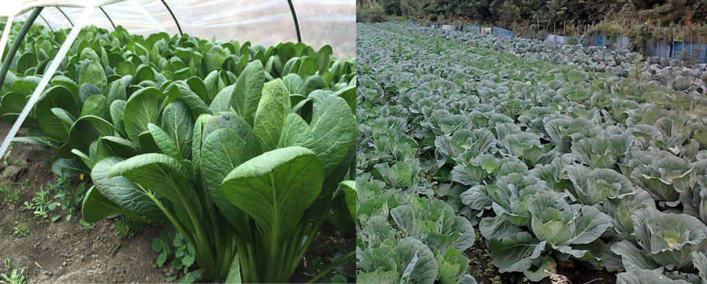 自分野菜作り体験