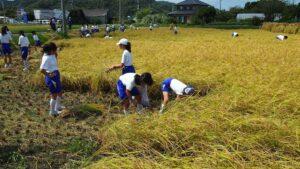 稲刈り-3