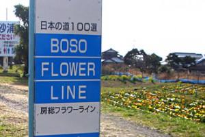 flowerline-3