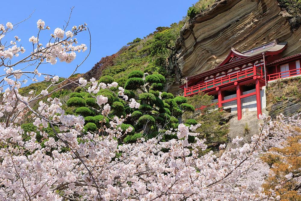 崖観音桜の季節